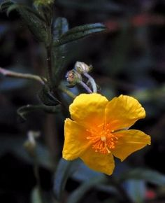 Fleur de bach terreur nocturne