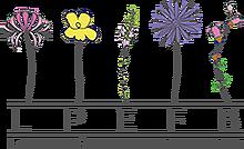 Ecole fleurs de bach