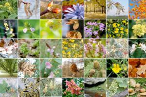 Comment choisir les fleurs de bach