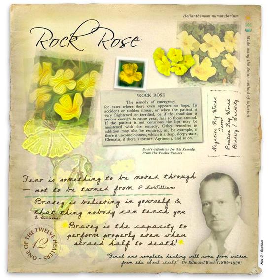 Fleur de bach rock rose